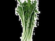 cicoria021